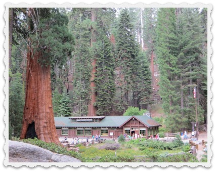 More Sequoia