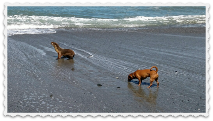4-16 - In Crescent City - Augie & the Seal